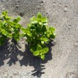 Plant growing in sand — Stock Photo