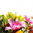 Stock Photo: Flower border