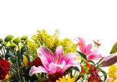 Flower border — Stock Photo