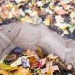 Fall leaves and raking — Stock Photo