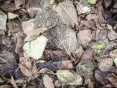 Dead leaves background — Stock Photo