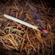 Stock Photo: Burning match in pine needles