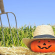 Pumpkin in the farm. — Stock Photo