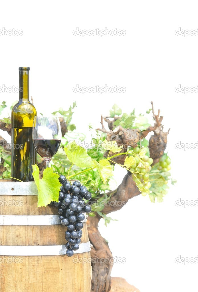 Isolated vineyards with grapes and wine bottle.  Stock Photo #12485466