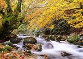 Autumn. — Foto Stock