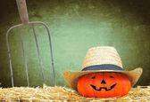 Pumpkin in the farm. — Stock Photo