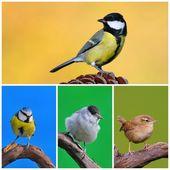 Garden birds. — Stock Photo
