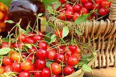 Cherries. — Stock Photo