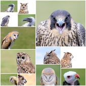 Falconry birds. — Stock Photo