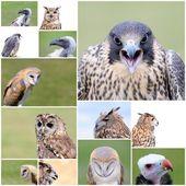 Falconry birds. — Stock Photo