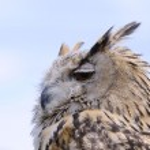 Eagle Owl. — Stock Photo #49251811