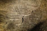 Wooden Tree Background — Stock Photo