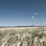 Wind mill in grain — Stock Photo