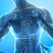 Royalty-Free Stock Photo: Spine pain concept