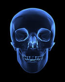 X-ray skull — Stock Photo