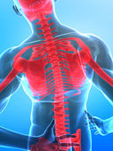 Human x-ray spine — Stock Photo