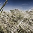 In grain field - closeup - Stock Photo