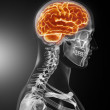 Human Brain Medical Scan — Stock Photo