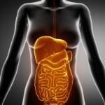 ������, ������: Female Abdominal organs