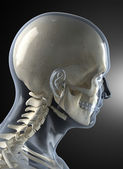 Male Human Head X-ray — Stock Photo