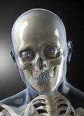 Male Human Head X-ray Front view — Stock Photo