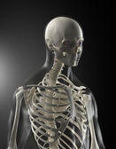 Human Body Medical Scan — Stock Photo