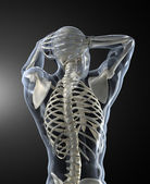 Human Body Medical Scan back view — Stock Photo