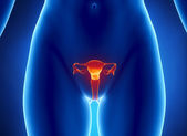 Female REPRODUCTIVE system x-ray view — Stock Photo