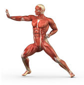 Male muscular system in fight position — Stock Photo