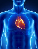 Human heart with thorax — Stock Photo