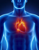 Human heart in detail with glowing rays — Stock Photo