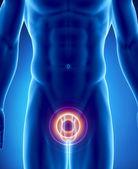 Dolor en los órganos urogenitales — Foto de Stock