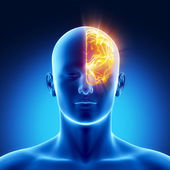 Left hemisphere concept — Stock Photo