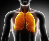 Human respiratory system with lungs and bronchial tree — Stock Photo