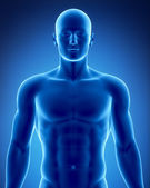 Male figure in anatomical position — Stock Photo