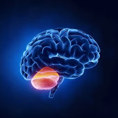 Beyincik bölümü - insan beyni x-ray görünümü — Stok fotoğraf