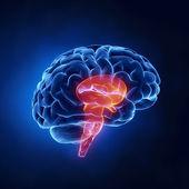 Parte - cérebro humano na visão de raio-x da haste — Foto Stock