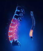 Lumbar spine anatomy in blue detail — Stock Photo