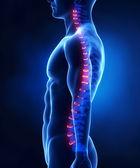 骨干椎间盘解剖横向视图 — 图库照片