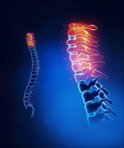 Cervical spine anatomy in detail — Stock Photo