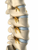 Backbone Spinal nerve - side view — Stock Photo