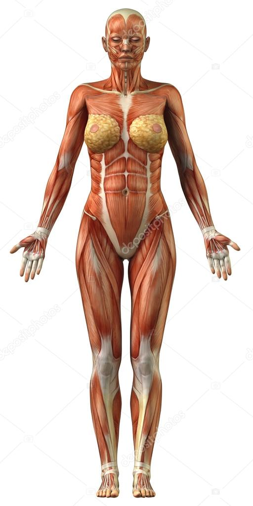 Photo of female anatomy