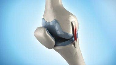 Human knee anatomy rotation — Stock Video