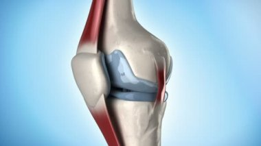 Knee medical anatomy in loop — Stock Video