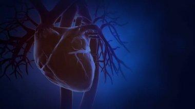 Heart beat in loop — Stock Video