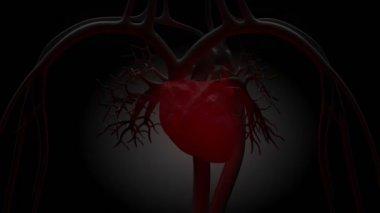 Glowing red heart in loop — Stock Video