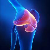 Articular cartilage anatomy — Stock Photo