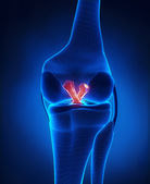 Anterior and Posterior Cruciate Ligament — Stock Photo