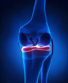 Lateral and medial meniscus anatomy — Stock Photo