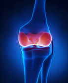 Articular cartilage anatomy posterior view — Stock Photo